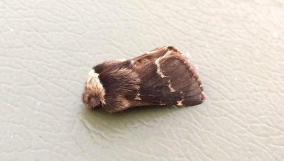 December-moth1-1